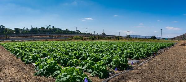 RC-PEACE-Farm