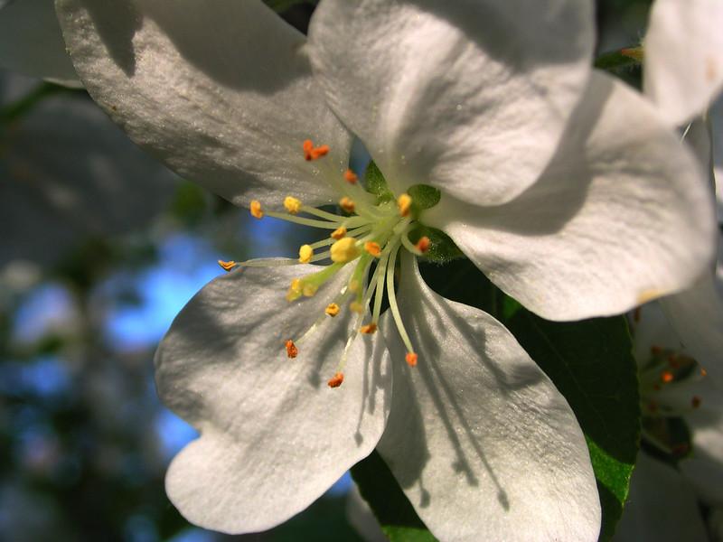 white bloom 25.JPG