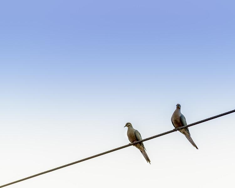 Birds on a Wire -0755.jpg