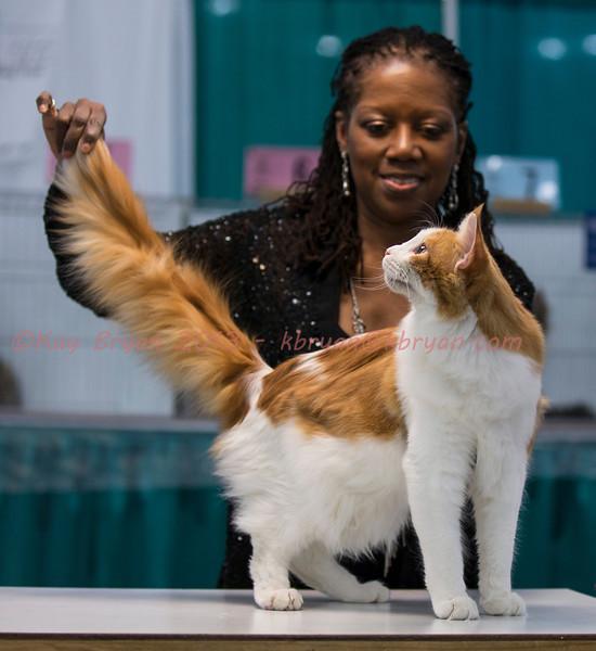 CatShow2014053_1.jpg