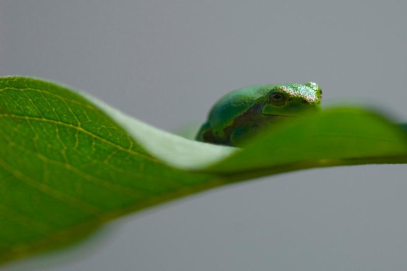 frog1765.jpg