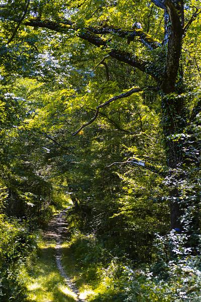 Des chemins et des arbres...
