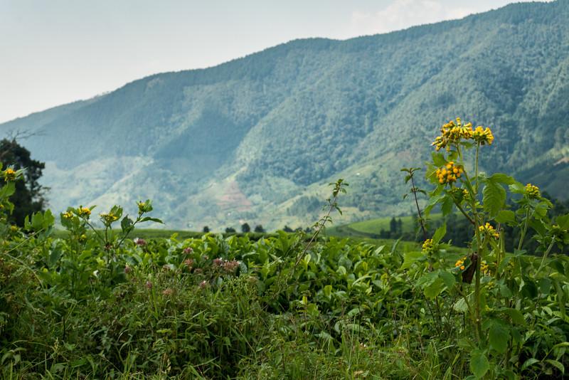 Nyugwe-Rwanda-53.jpg