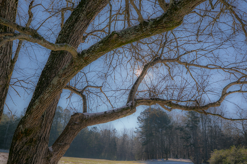 January Snow-12.jpg