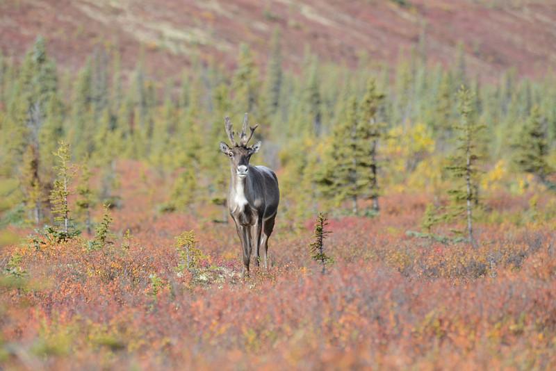 Alaska Fall 2013 - 182.jpg