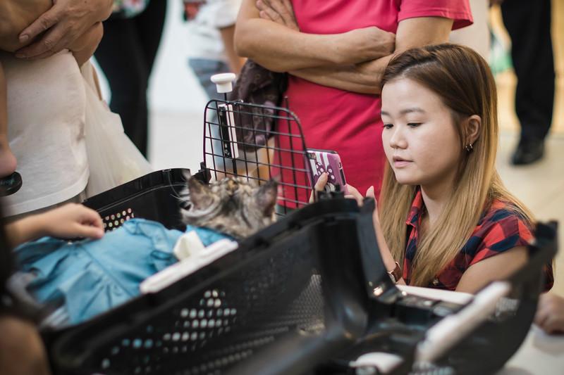 VividSnaps-The-Seletar-Mall-CAT-Dress-Up-Contest-007.jpg