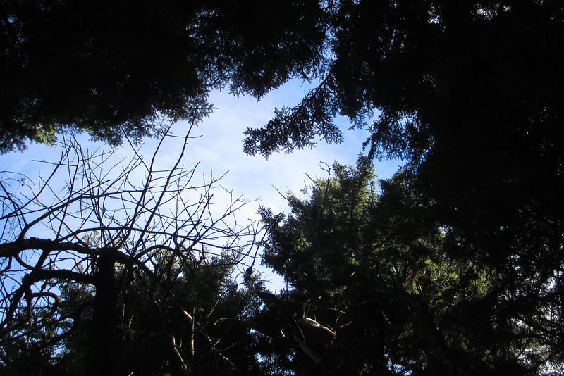 Blue Ridge Parkway - Mount Hardy Overlook -- 5,400'