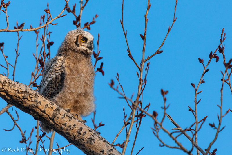 Owl-10.jpg