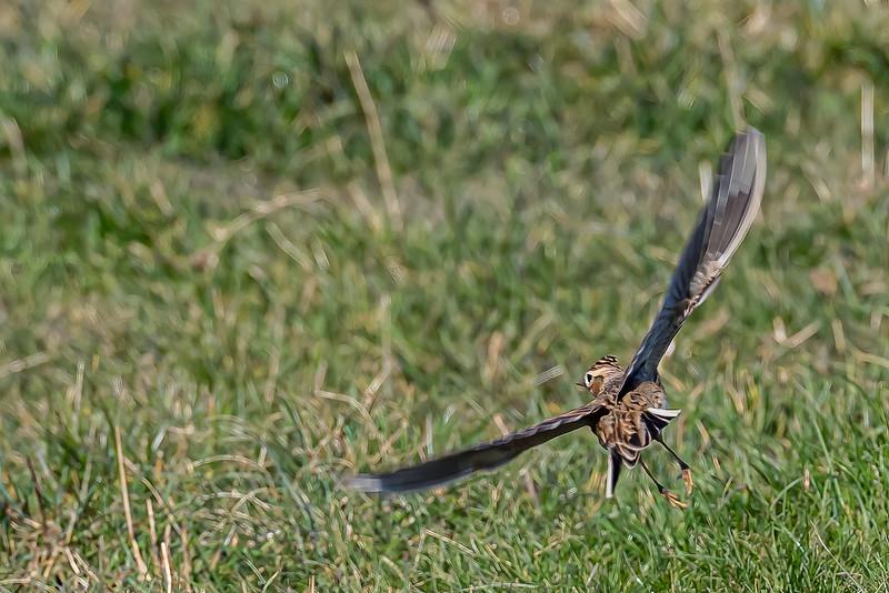Skylark Takeoff!