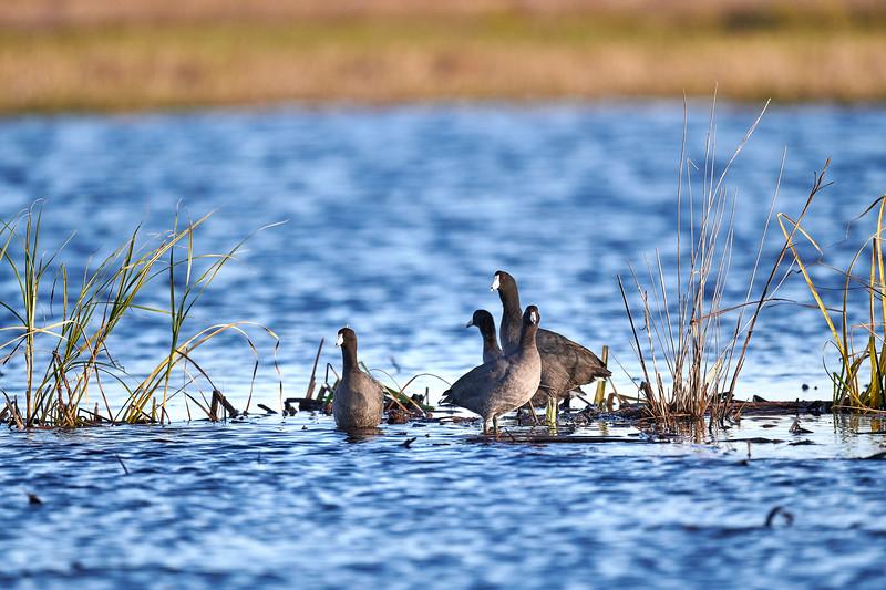 20181103 - Brazoria Wildlife Refuge-85B_3796.jpg