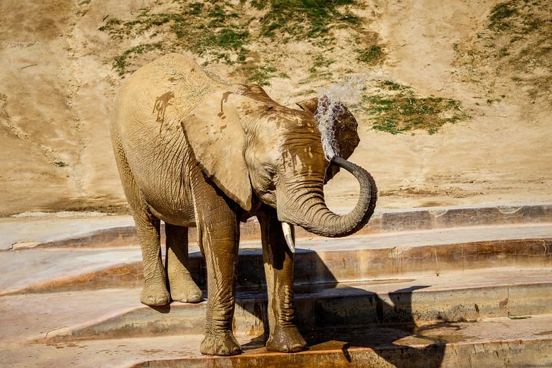 2016.06.01 Safari Park 0315.jpg