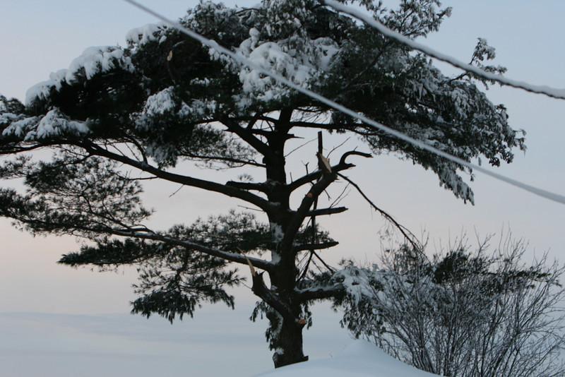 snow 2010 feb IMG_2387 (17).JPG