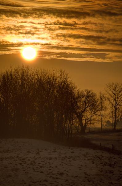 sunrise - trees snow and yellow glow 3-21-15(p).jpg