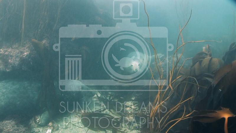 Lundy Island Edit.Still059.jpg
