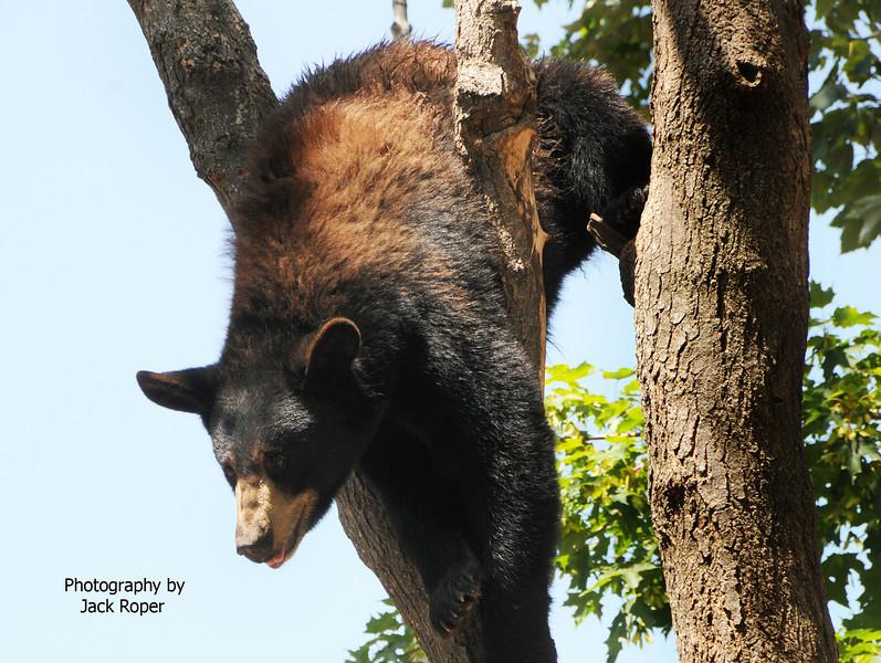Bear upside down .jpg