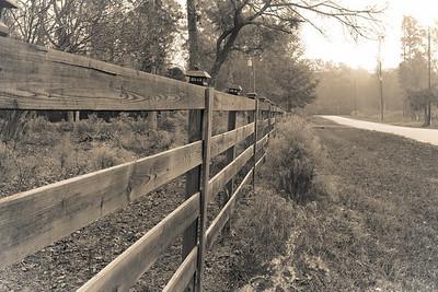 Black Oak 1900
