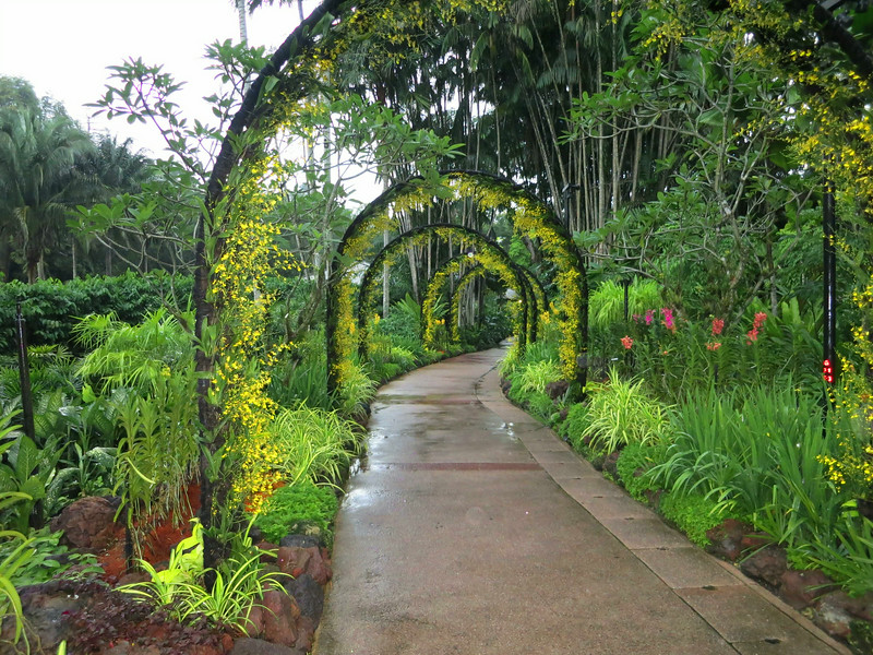 1731 Orchid Garden.jpg