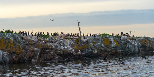 "The Wonders of ""BIRD ISLAND"""