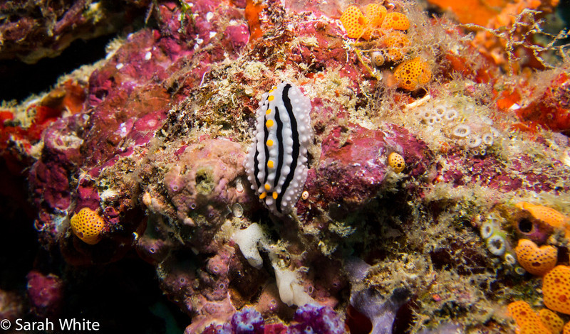 Maldives 2012-325.jpg