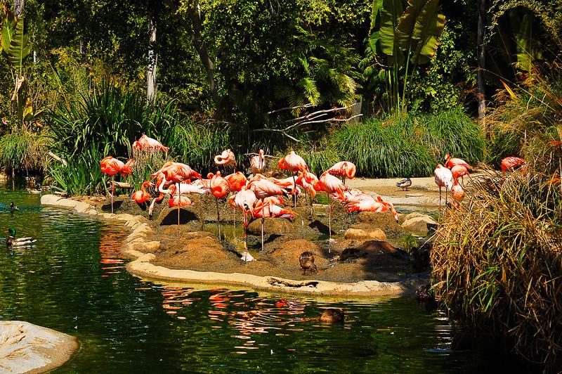 San Diego Zoo-3