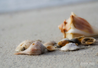 Note Cards - Southport and Oak Island, NC