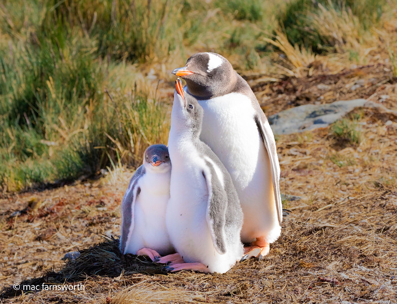 antartica-13.jpg