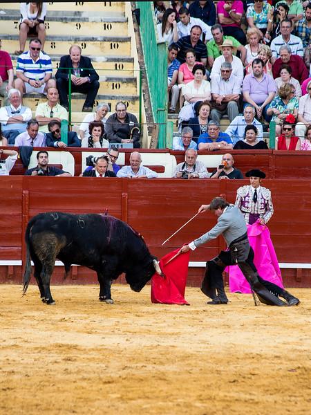 Bullfighting H16.jpg