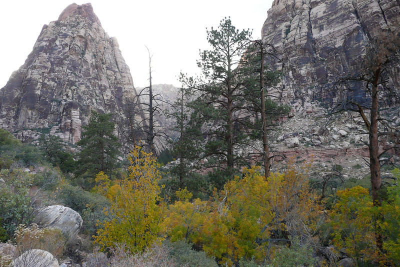 Pine Creek Canyon Trail. Red Rock Canyon