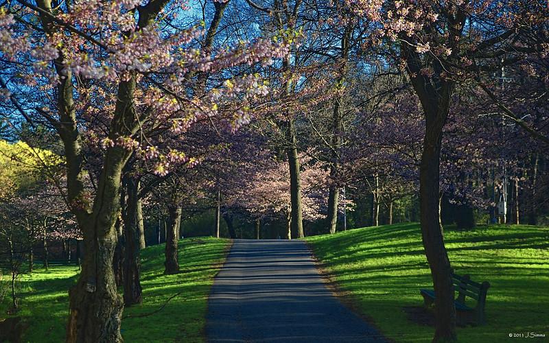 """Morning Serenity""  Centre Road, High Park, Bloor West Village, Toronto"