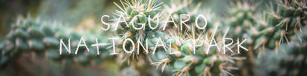 Saguaro National Park Gallery