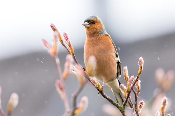 2015 Birds in the backyard