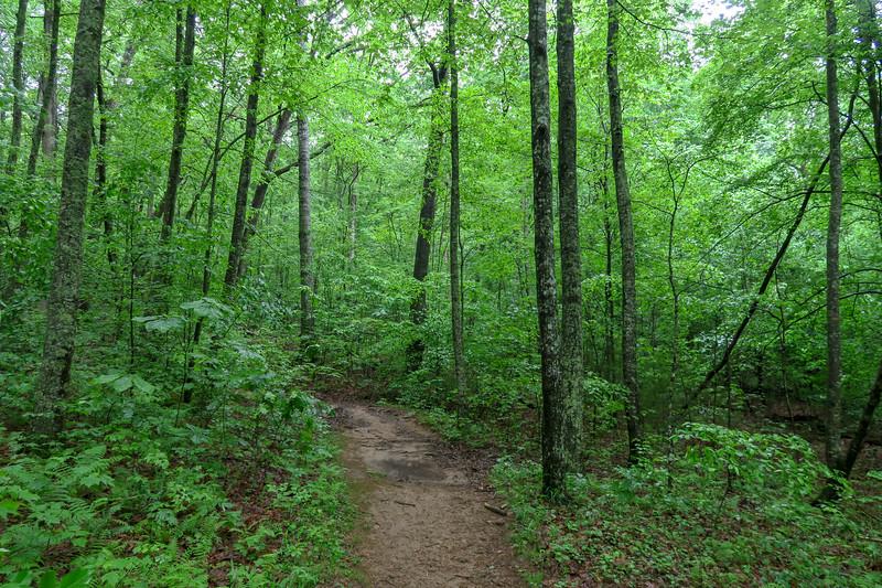 Lower Sidehill Trail -- 2,370'