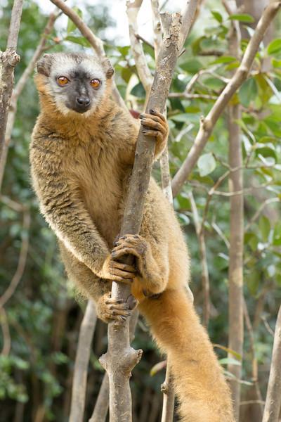 Madagascar_2013_IG3A2336.jpg