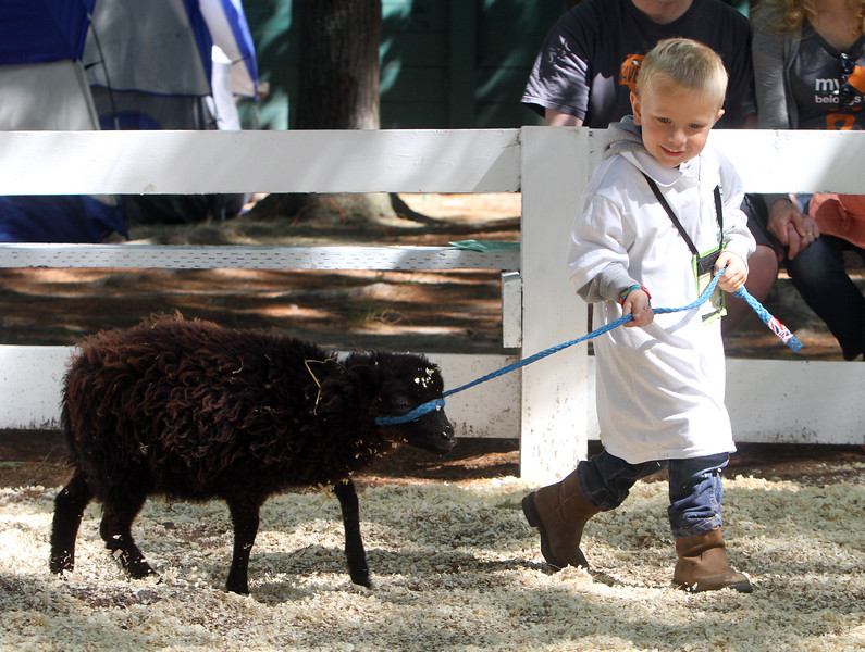 Middlesex County 4-H Fair. Gannon Hampson, 4, of Shirley, whose mother is a judge, leads Hermione, a Shetland ewe lamb, just for fun. (SUN/Julia Malakie)