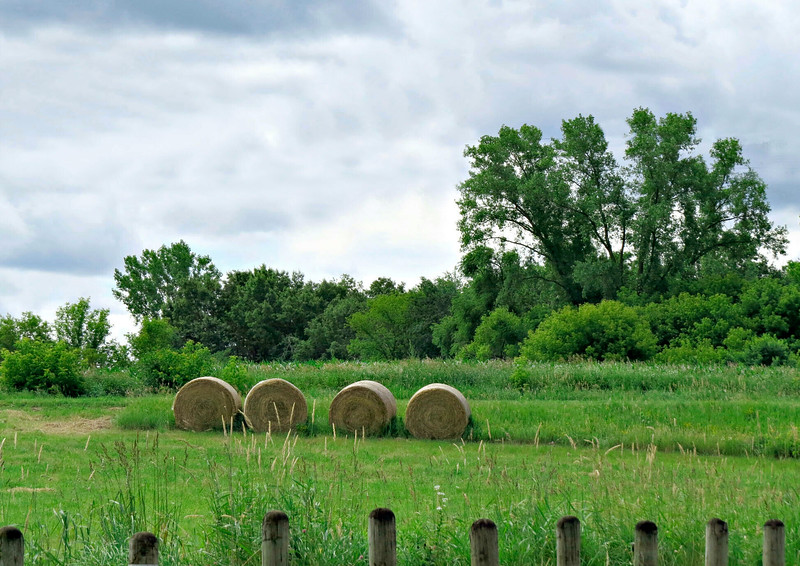 FOUR BALES OF HAY IN FIELD