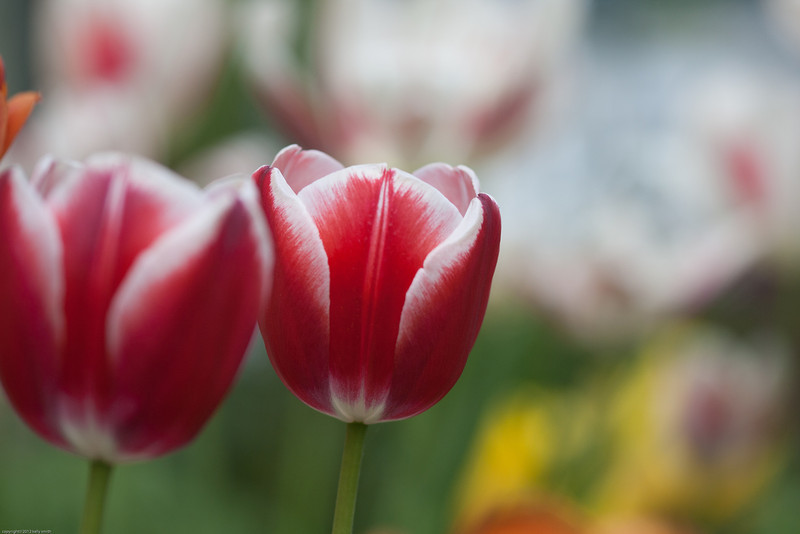 flowers-0450.jpg
