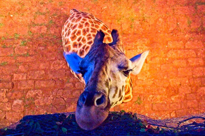 Breakfast, Giraffe Manor. Karen, Nairobi