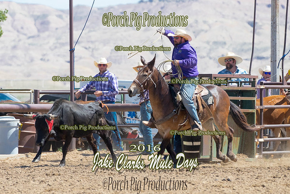 Wild Cow Milking  Jake Clarks Mule Days 2016