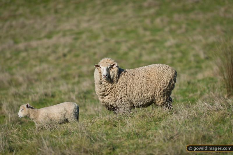 Ewe looking at me?