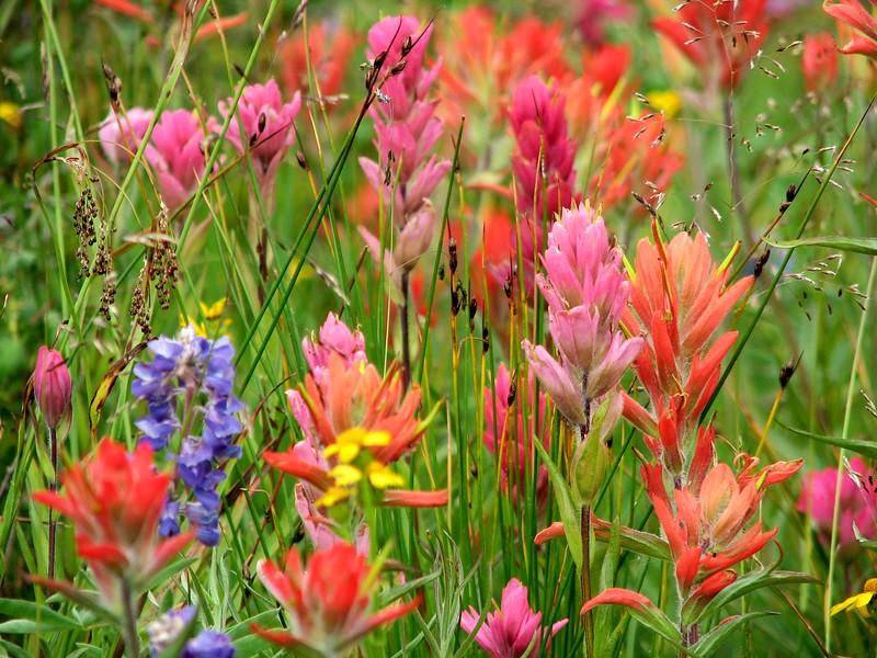 amh FLOWERS (1330).jpg