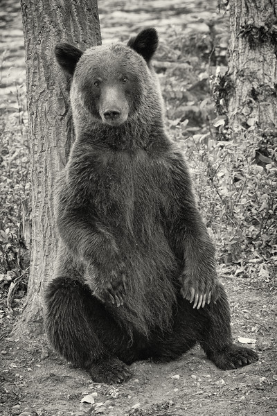 BC-Grizzly-Bears--5.jpg