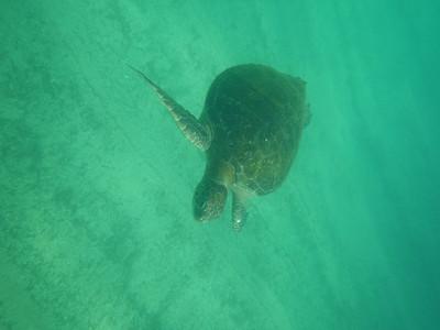 5-26-2018 Galapagpos Snorkeling Card 2