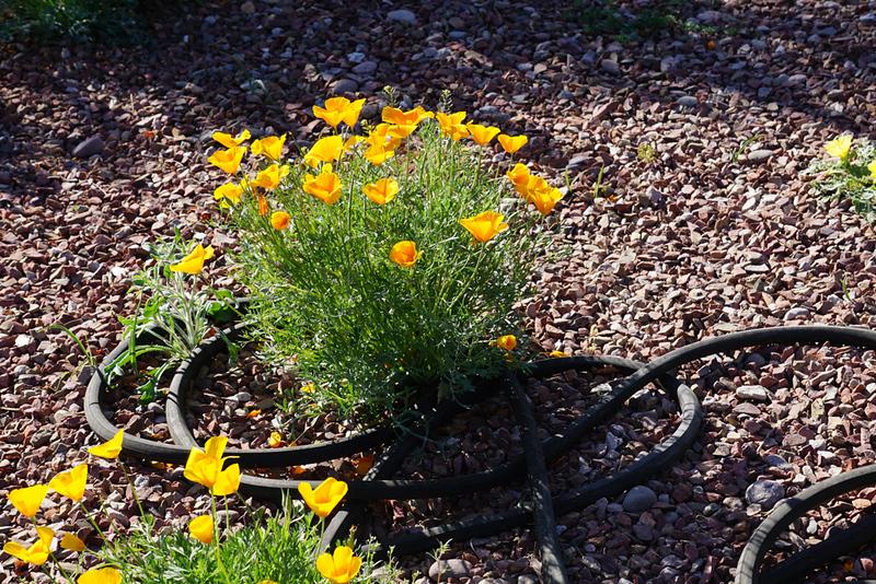 flowers-garden.jpg