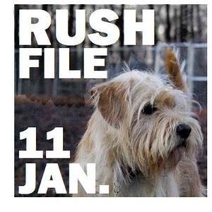 11 JAN. RUSH FILE