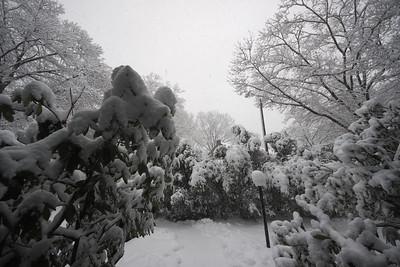 Feb. 5, 2016 Snowstorm