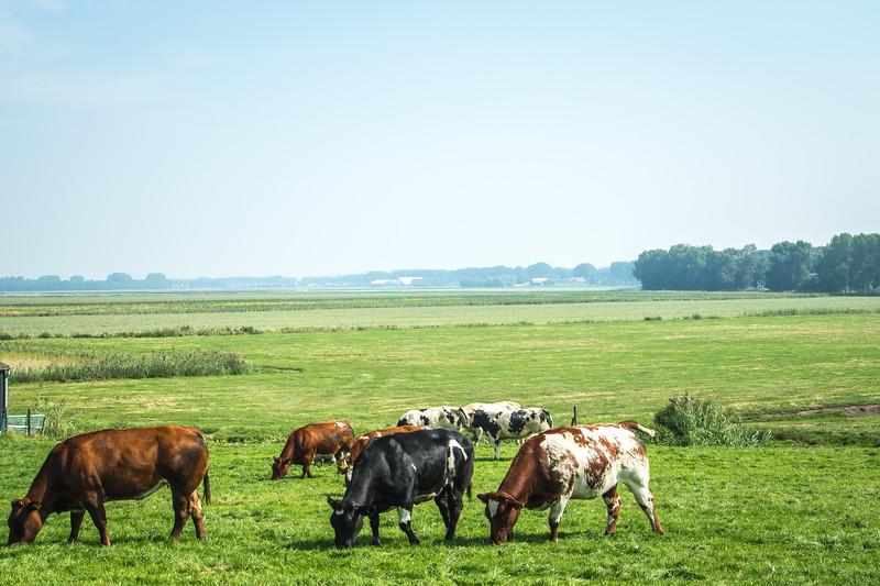 piekberging Haarlemmermeer-13.jpg