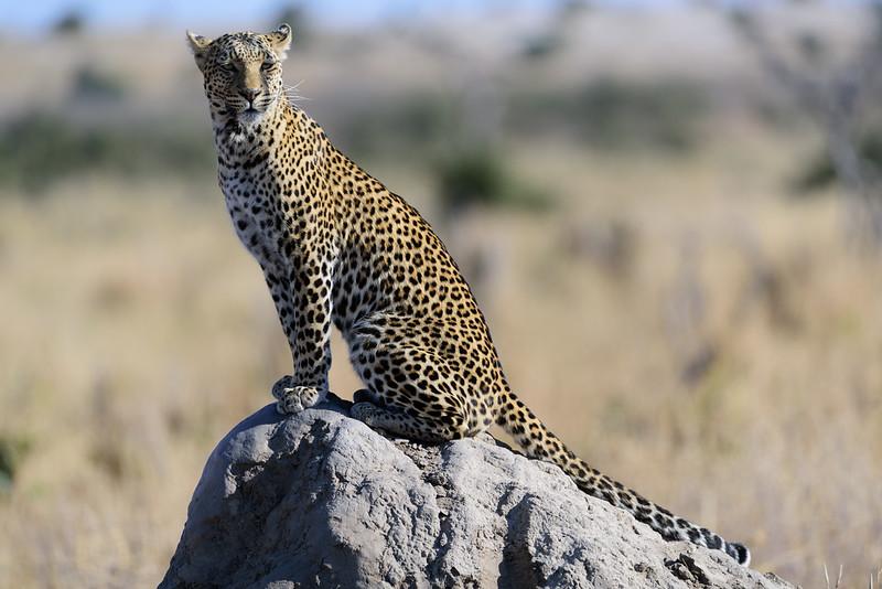 kg_africa_20170818_084035_07150.jpg
