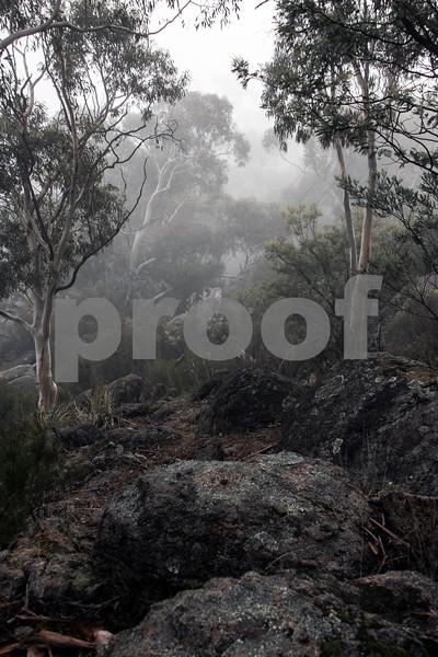 foggy trees 4.jpg