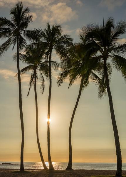 hawaii007.jpg