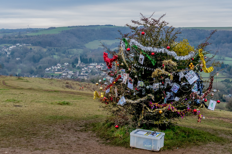 Dog's Christmas Tree-7797.jpg